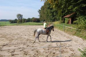sandplatz_und_longierzirkel_20120225_1681283042