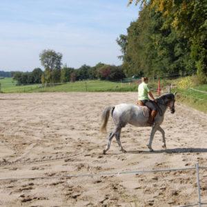 Pferd auf Sandplatz